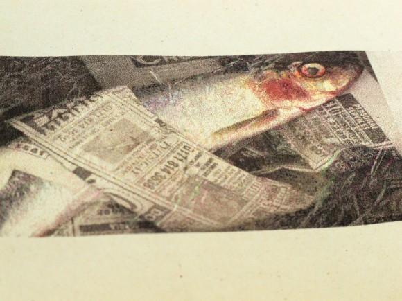 08_fishbook_5360