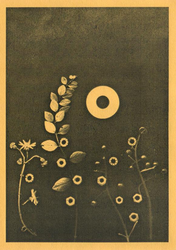 Scanogramm aus Pflanzen, Muttern und Beilagscheibe