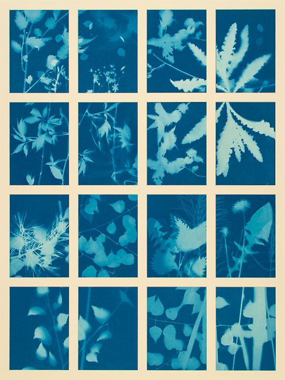 4 mal 4 preussich blaue Fotogramme von Pflanzen- und Blütenblättern wie zum Beispiel Birkenblätter