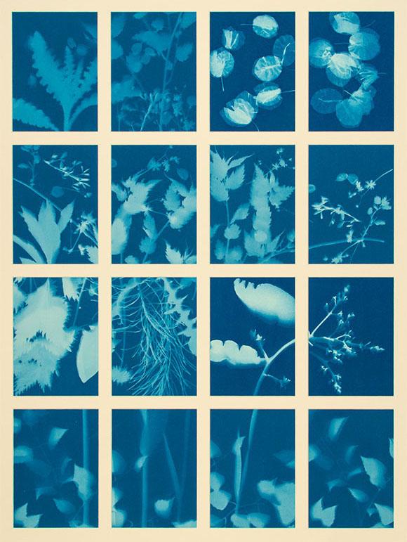 4 mal 4 preussich blaue Fotogramme von Pflanzen- und Blütenblättern wie zum Beispiel Löwenzahn